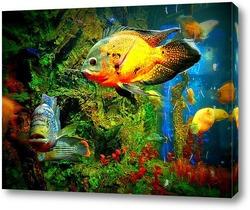 Постер Подводный мир