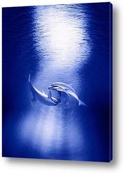 Постер Dolphin071
