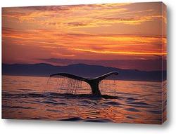 Постер Whale029
