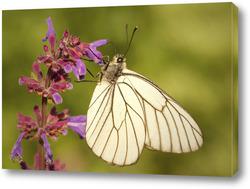 Постер Бабочка на красиво цветке