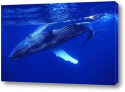 Постер Whale018