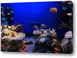 Постер Coral015