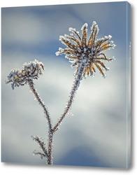 Постер Растение на снегу