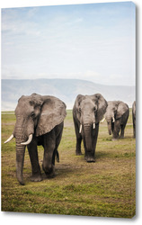 Слоновья семья