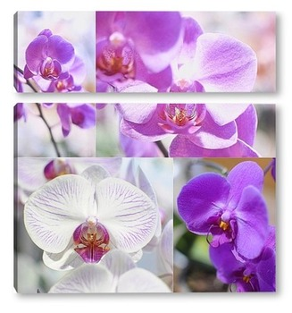 Модульная картина Орхидеи коллаж