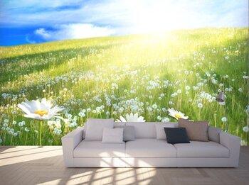 Солнечный луг с ромашками и одуванчиками
